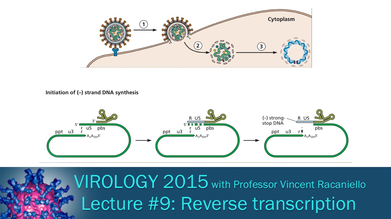 virology 2015 lecture 9 reverse transcription and integration [ 1280 x 720 Pixel ]