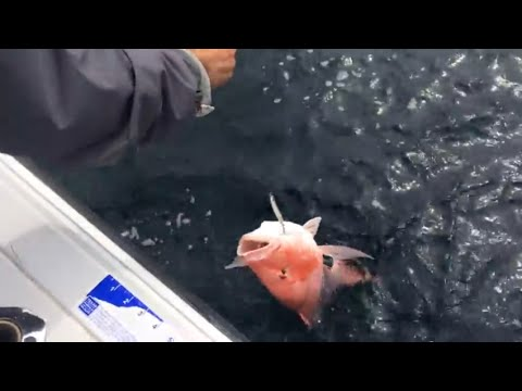 Gulf of Mexico red snapper fishing Padre Island, TX!