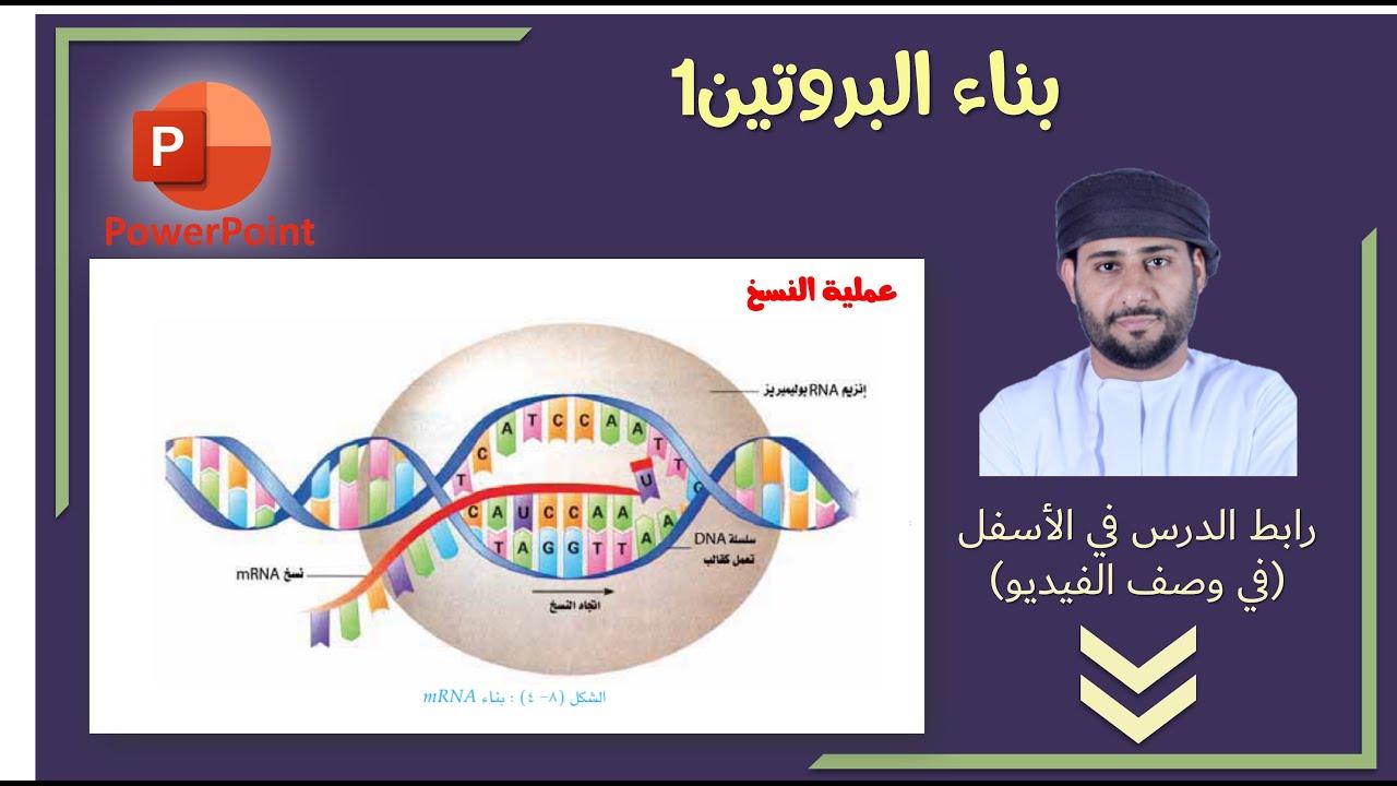 بناء البروتين الجزء الاول Youtube