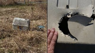 Bikers Find Chewed Up Crate In Field. When They Look Inside Their Hearts Drop