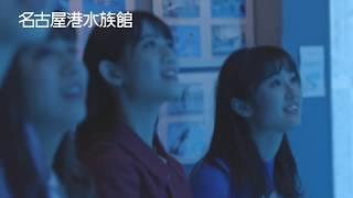 【名古屋港水族館】ENJOY!! AQUARIUM、シャチのリンちゃんの魅力にTEAM SHACHI(読み:シャチ)が迫る!