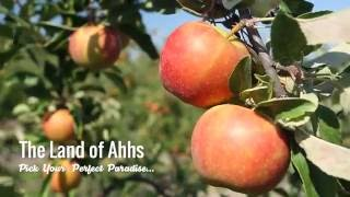 "The Land of Ahhs: ""U-Pick"" Apples in Paradise"