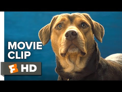 a-dog's-way-home-exclusive-movie-clip---new-friends-(2019)-|-movieclips-coming-soon