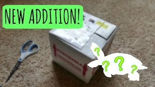 NEW ADDITION! | Turtle Unboxing