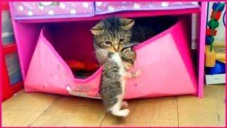 Новый домик для котят! Кошка переносит котят в ящик для игрушек ) Кошка и ее маленькие котята