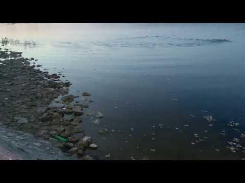 Спортсмен переплывает озеро в Гусь-Хрустальном