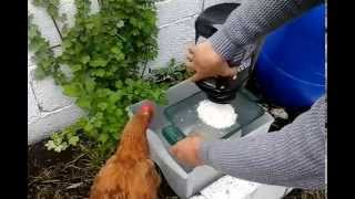 Maggot Farm: Feed Fish & Poultry part 3 Feed the chickens test