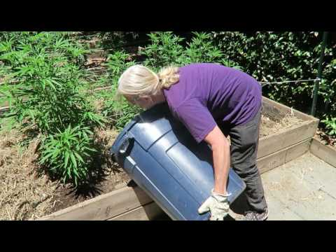 Cannabis Cultivation: Organic Fertilizer, Mulch and Water