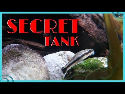 Otocinclus Catfish Breeding Tank - A New Project