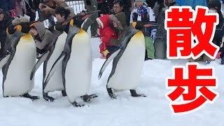 【旭山動物園】ペンギンの散歩が可愛すぎた