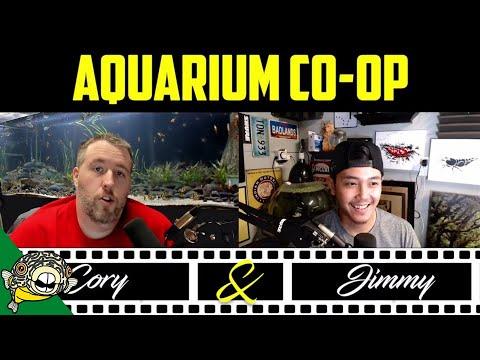Medium Difficulty Fish Tank Plants. Aquarium Plant Sale! 25% OFF!