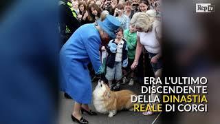 Gb: la Regina piange il suo Willow, l'ultimo cane della dinastia reale