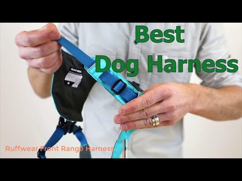 best-dog-harness-in-2019