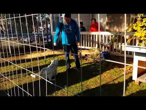 Fences For Fido - Sparky