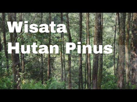lembang---wisata-hutan-pinus-cikole-lembang-i-travel-blog-indonesia