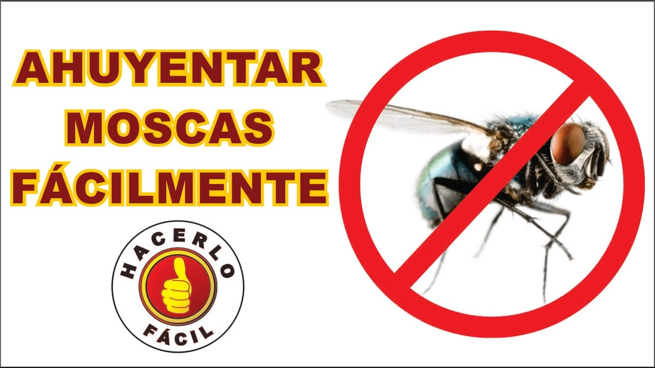Repelente para moscas 2 m todos para ahuyentar moscas - Como espantar moscas ...