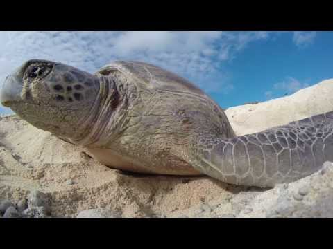 National Geographic Pristine Seas Expeditions   New Caledonia