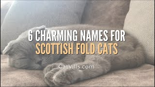 6 CHARMING NAMES FOR SCOTTISH FOLD CATS