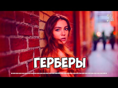 Рапсат - Герберы | 2019