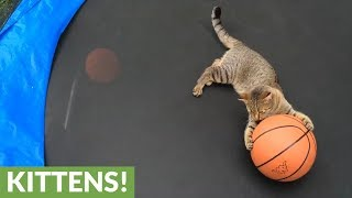 Timmy the cat loves playing basketball