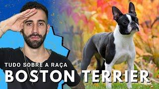 Boston Terrier - Por dentro da raça