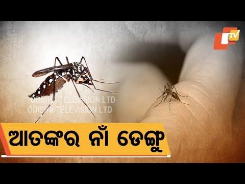 Dengue scare spreads across Odisha