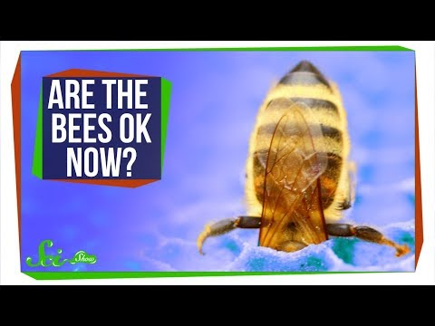 Are the Bees Okay Now?