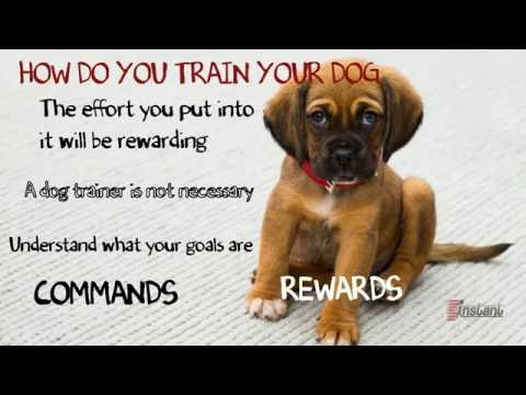 How Do You Train a Dog