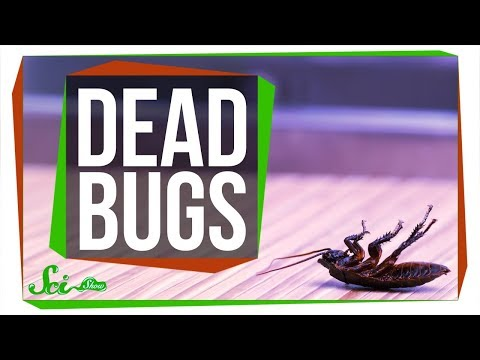 Why are Dead Bugs Always on Their Backs?