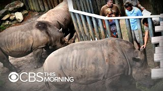 Toddler comes into contact with rhino after falling into Florida zoo pit