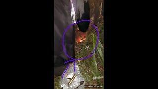 """Download Video MELEDAK """"Pengambilan Pusaka Merah Delima (Real) Ngawen/Japah Kab.Blora MP3 3GP MP4"""
