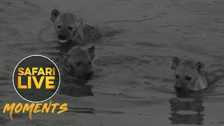 Hyenas Host a Pool Party!