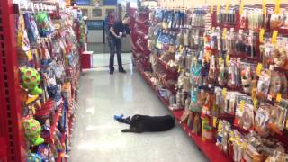 Cooper Conquers The Petco Treat Aisle