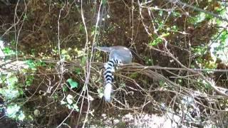 very small zoo in mallorca