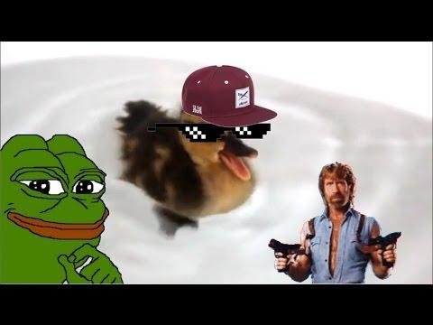 Die Schreiende Ente