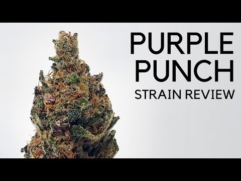 Purple Punch Cannabis Strain Review & Information - ISMOKE