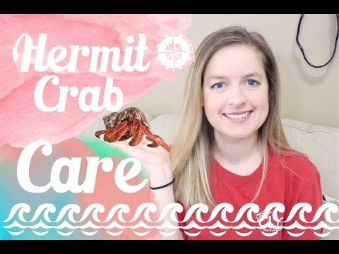 Hermit Crab Care & Tank Setup