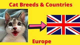 Cat Breeds & Countries #1 Europe
