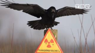 Я ВАМ СПОЮ (Олег Лавров, про Чернобыль) 25 выпуск