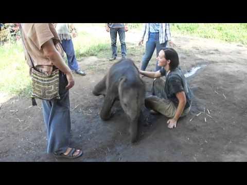 Playful baby elephant!