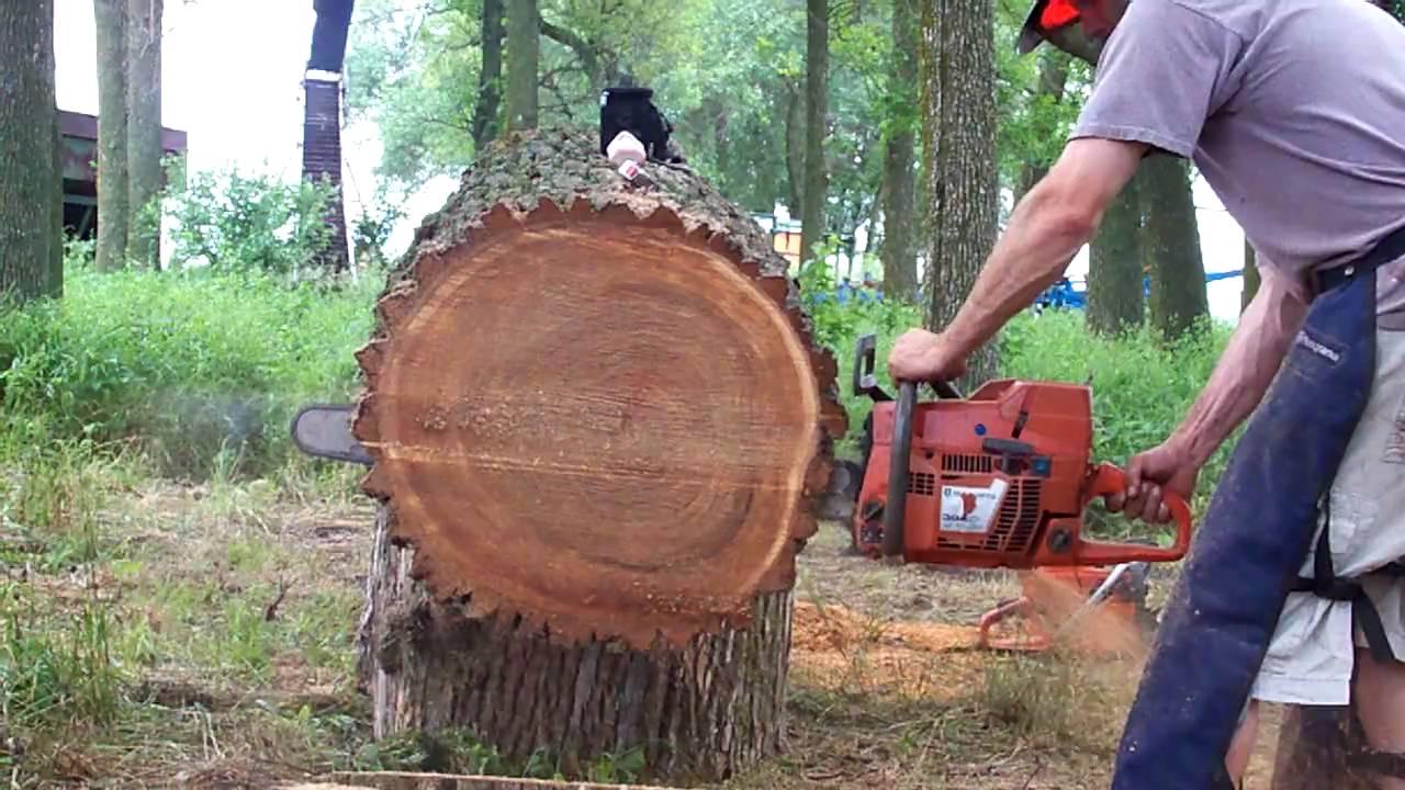 ember láncfűrész keresek nő erdőben)