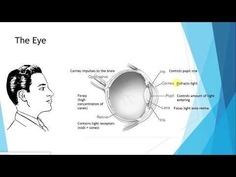 IGCSE BIOLOGY REVISION [Syllabus 14] The Eye