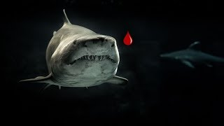Testing if Sharks Can Smell a Drop of Blood
