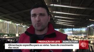 Produção de leite na Vale de Leandro