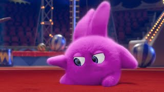 Sunny Bunnies | Hopper the Pink Starfish | COMPILATION | Cartoons for Children