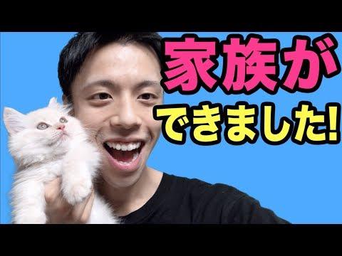 【ご報告】家族ができました!【子猫 マンチカン Cat】