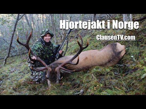 Hjortejakt I Norge, En Film Av Kristoffer Clausen. Hunting A Massive Red Stag In Norway.