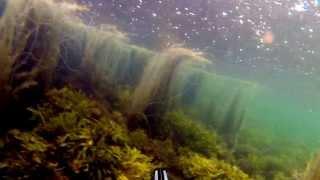 UV-Jagt Kalundborg ikke nogen fisk men flot bund i regnvejr:) 1 af 2