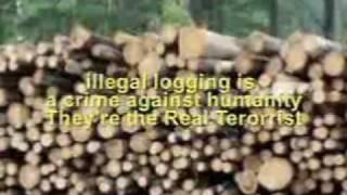 Kemarau - Delly Rollies (IPH)