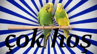 Çok HoŞ Sesİ Papağan Ve Muhabbet Kuşu Konuşturma Sesi Ses Kaydı 1 Saat